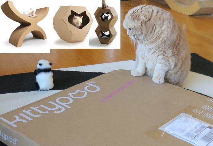 kittypod, cat furniture, cardboard scratcher, cat bed, cardboard cat bed,  scottish fold cats, british shorthair fold, exotic shorthair cats