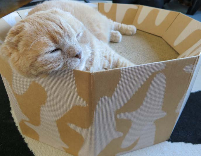 Cardboard cat scratcher bed for Chaise lounge cat scratcher