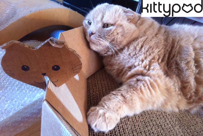 kittypod, cat furniture, designer cat furniture, cardboard scratcher