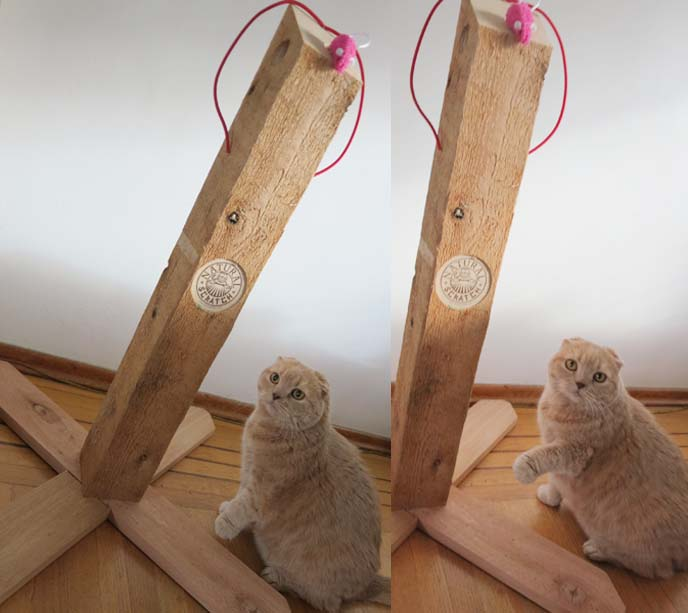 wood cat scratcher, natural scratch, best scratching pole, designer cat scratching poles, scratch wood pole cats, scottish fold cat