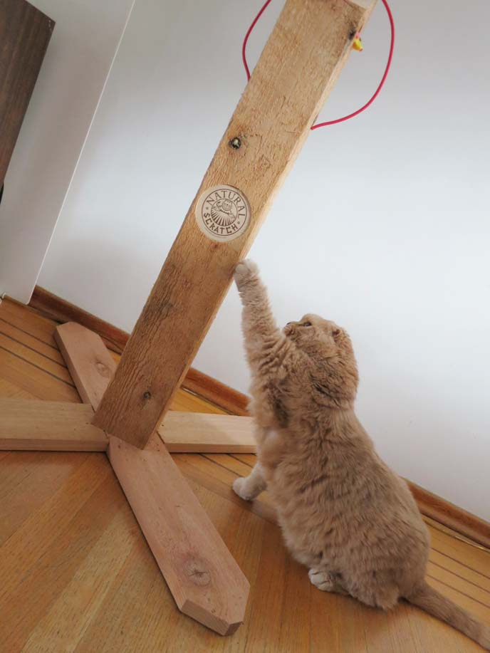 wood cat scratcher, natural scratch, best scratching pole, coupari, shorthair folds, cat sharpening claws,