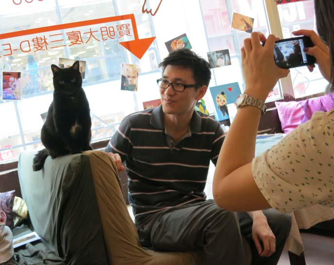 hong kong cat cafe, cat theme restaurant, japan theme cafe, weird theme restaurants asia