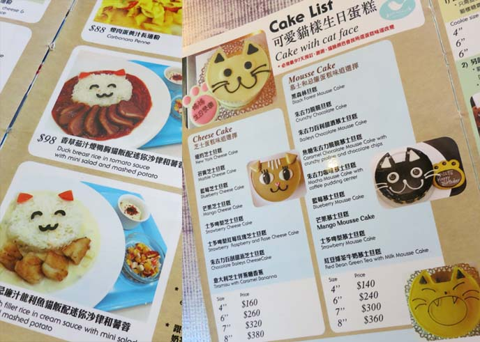 hong kong cat cafe, chinese cat restaurant, cat cafe menu, squish faced cats, squishy faced kitten
