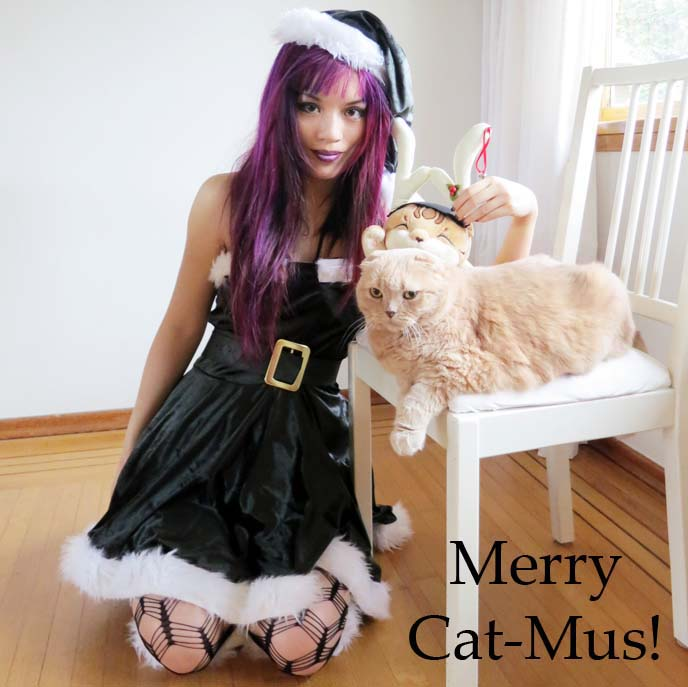 naughty elf costume, sexy womens costumes, halloween 2013 costumes, women costumes, elf outfit, christmas makeup, purple hair, purple hair color, emo hairstyle, goth hairstyles, scottish fold cat, cutest cat ever, elf outfit, santa hat, green elf, cross fishnet tights, cross fish stockings, leg avenue, purple lipstick, halloween costume ideas, gothic costume