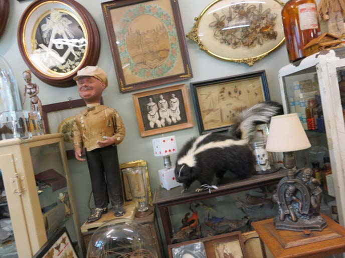 oddities store, stuffed skunk, obscura, nyc antique store, east village antiques