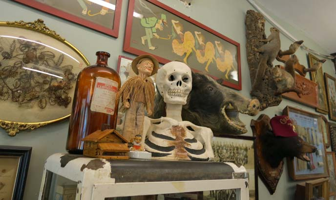 oddities, goth store, skeletons, bizarre store, weird antiques