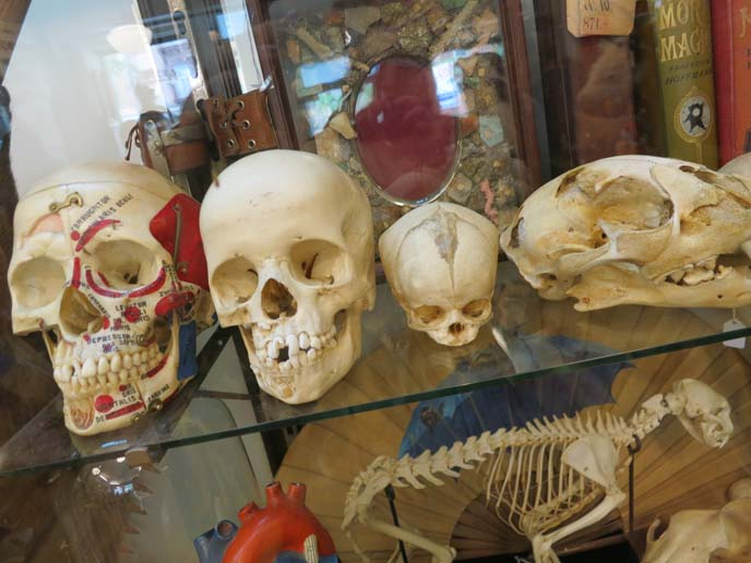 skulls for sale, skeletons