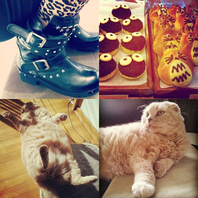 cute scottish fold cat, yosuke boots, studded goth boots, totoro pasteries, cute japanese desserts
