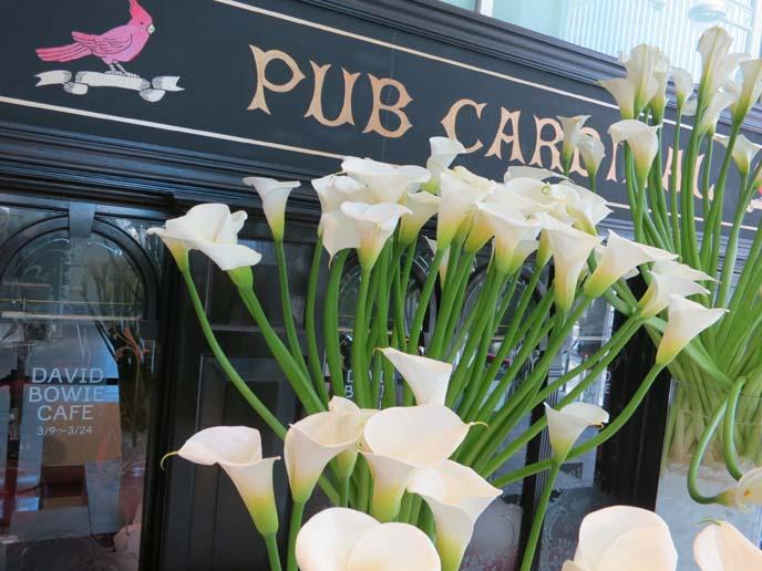 pub cardinal, sony building, ginza david bowie cafe, tokyo theme restaurants