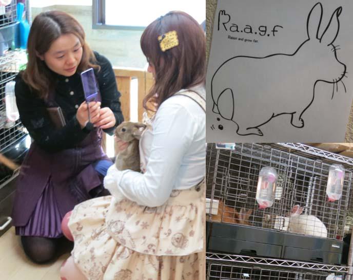 Rabbit and Grow Fat, harajuku rabbit cafe, tokyo bunny restaurant, raagf