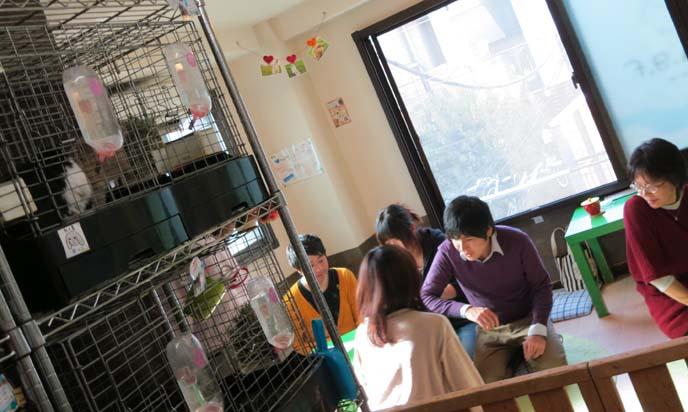 bunny cafe, japanese rabbit cafes, tokyo bunny cafe raagf