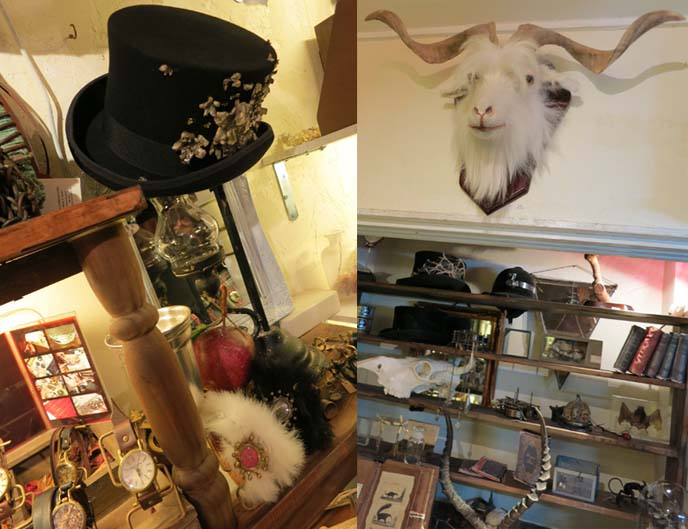 top hats, taxidermy, victoriana