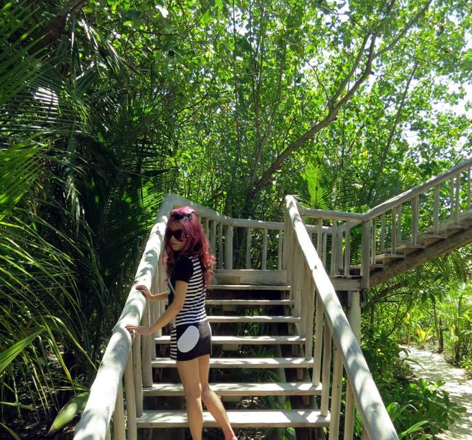equator forest, tropical resorts, eco lodges