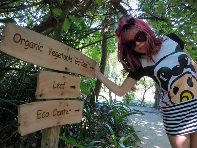 organic vegetable garden, south asia