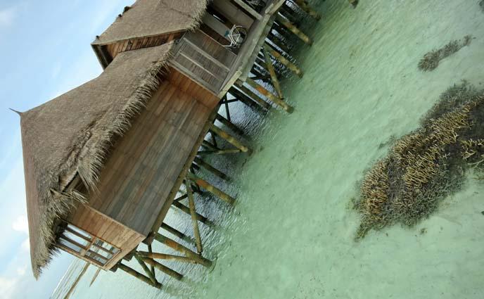 Maldives coral reef, fish, indian ocean wildlife