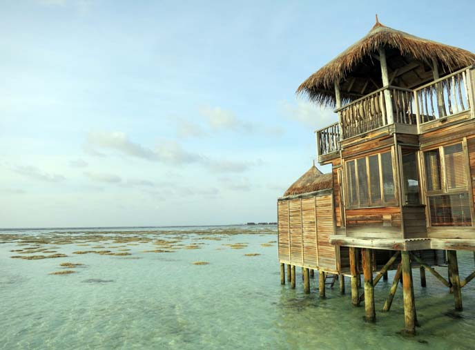 Maldives coral, ocean, gili lankanfushi