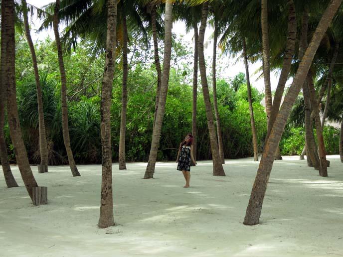 tropical palm trees, white sand beaches