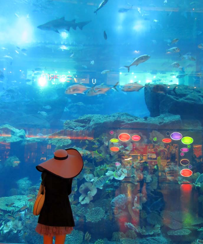 Dubai Mall aquarium, largest indoor aquarium