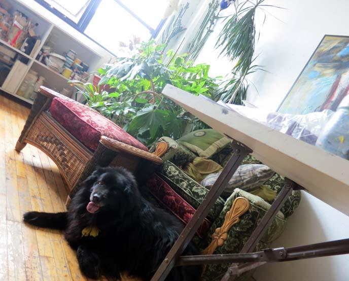 Montreal artist studio, gallery