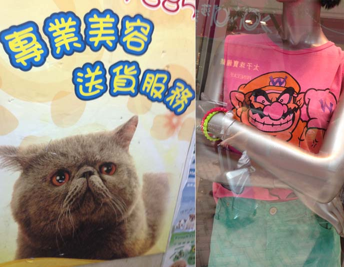 wario tshirt, exotic shorthair cats pet store