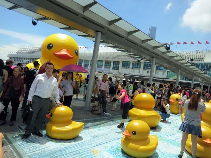 hong kong duck, floating rubber ducky art