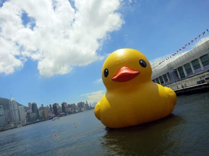 rubber duck, hong kong, kowloon harbour