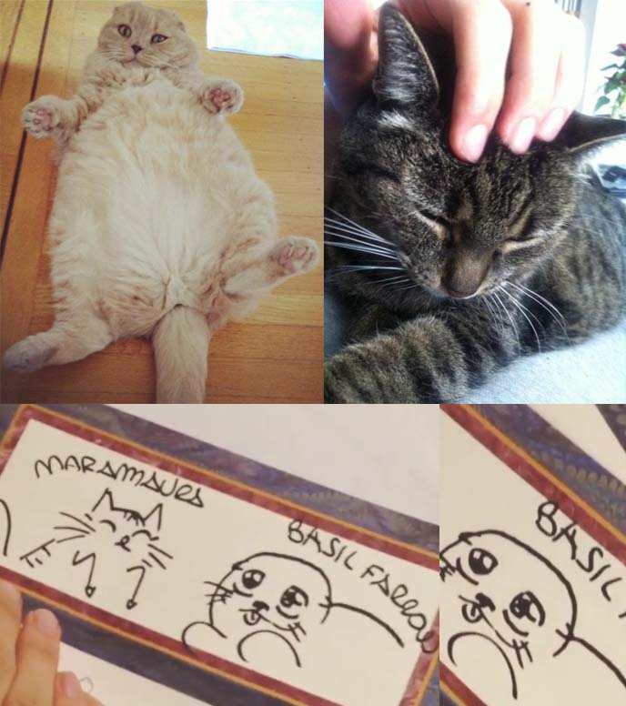 cute cat drawings, cat sketches