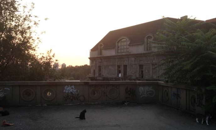 stray cats, east europe ruins