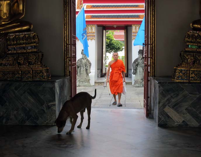 thai monk, orange robes