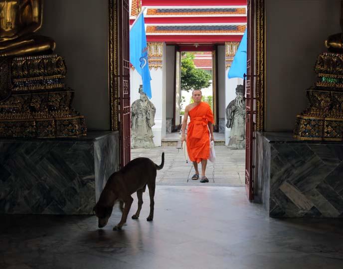 thai monk, orange robes