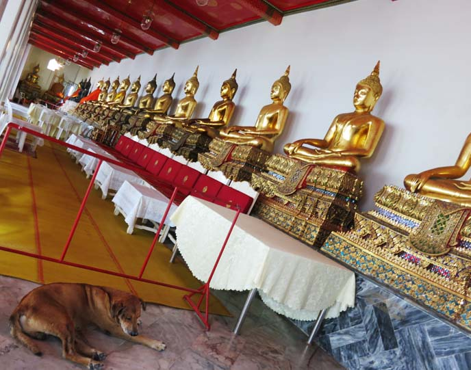 Row Of Golden Buddha Statues, wat pho