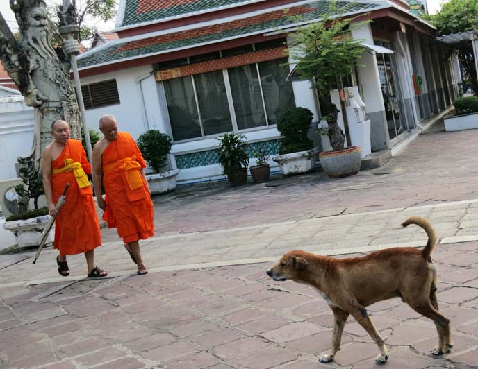 dog sanctuary, buddhist temple