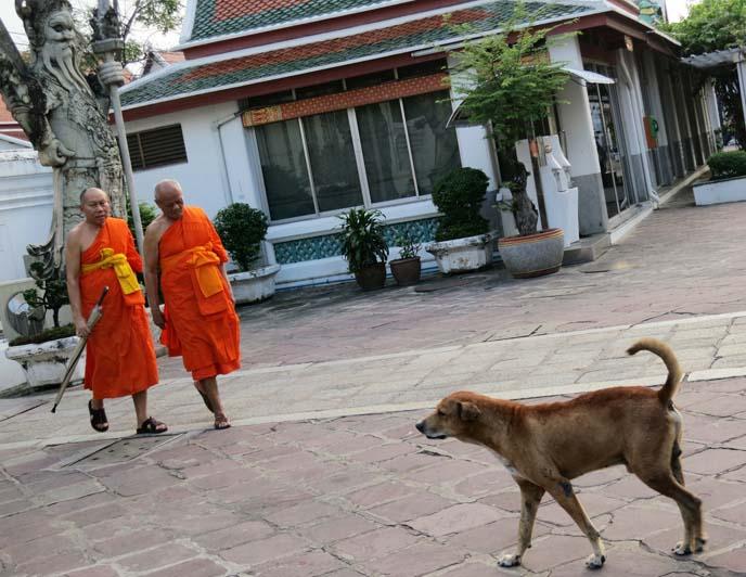 dog sanctuary, buddhist temple