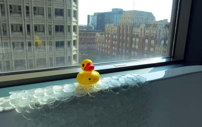 rubber ducky, seattle hotel 1000