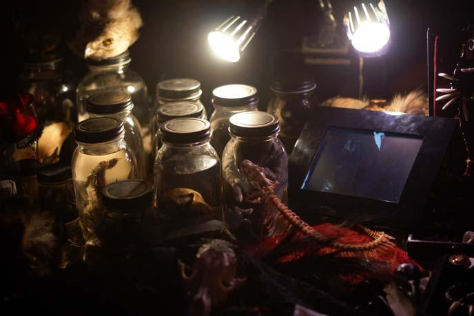 animals preserved in jars