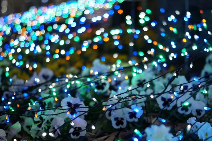 bokeh effect, photography japan