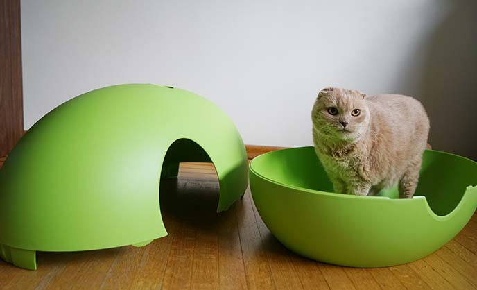 Modern hidden cat litterbox poopoopeedo by sindesign japan cat cafes interior design pet - Modern kitty litter box ...