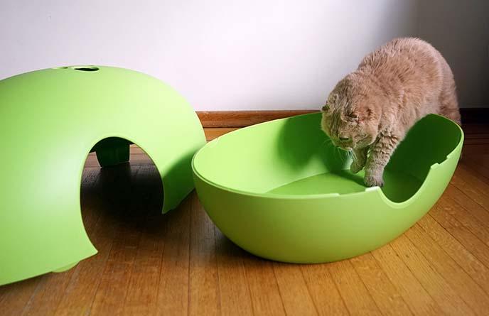 hiding cat litterbox