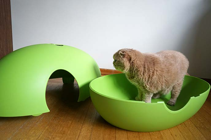 cat play pod litter