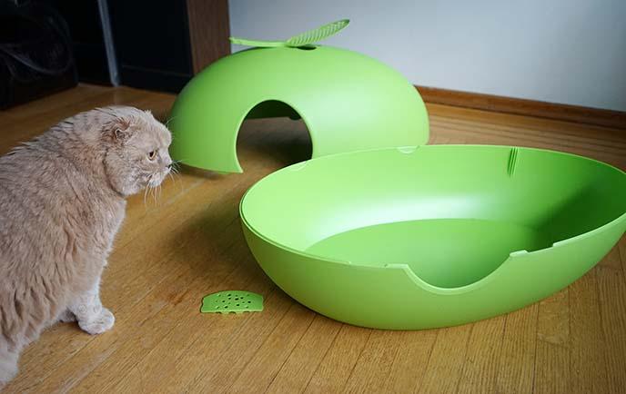 Poopoopeedo cat furniture