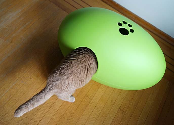 modern cat litterbox