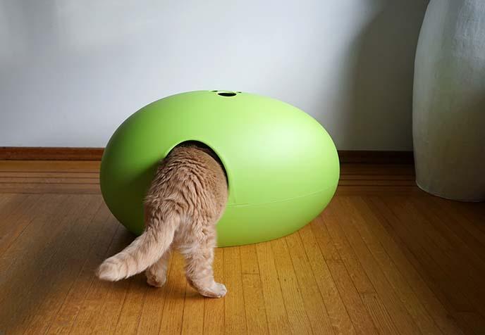 Luxury Cat Playground Box