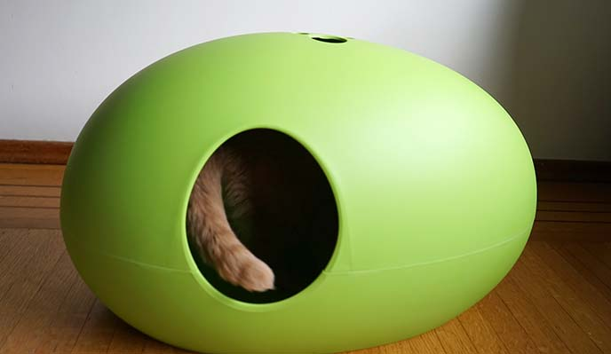cat interior design furniture