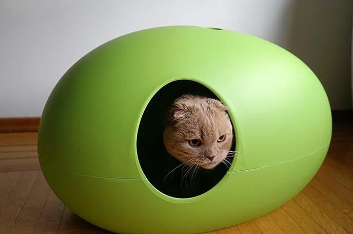 maison de toilette pour chats
