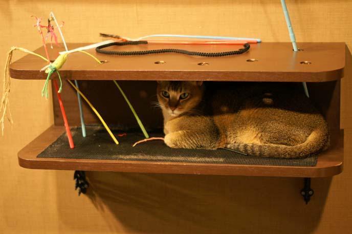 cat house, furniture