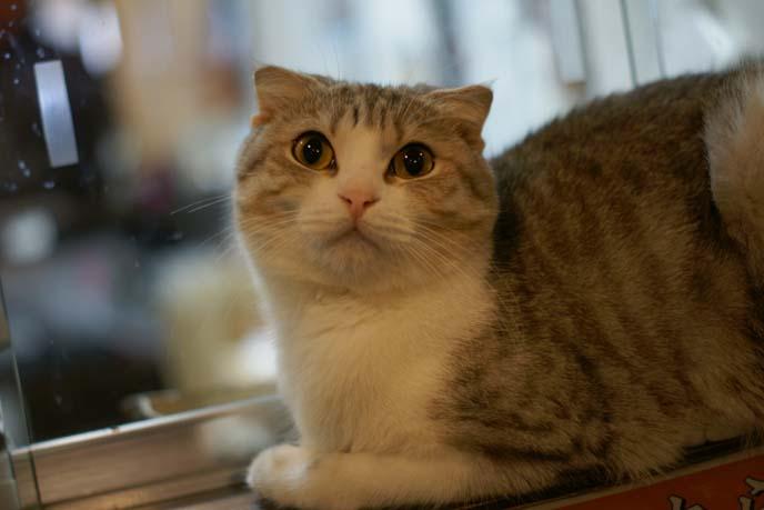 cat sitting on windowsill