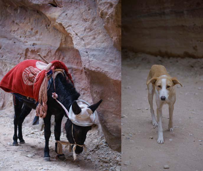 donkey rides petra