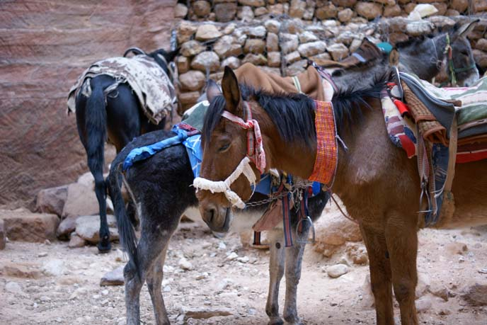 middle eastern horses