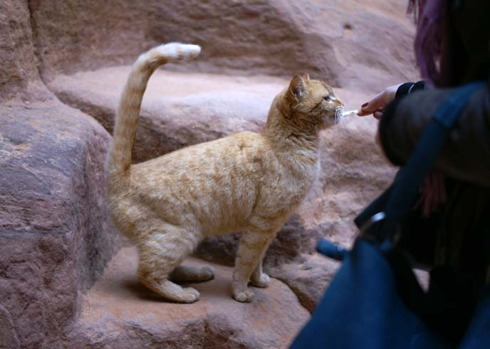 tourists feeding stray feral cat