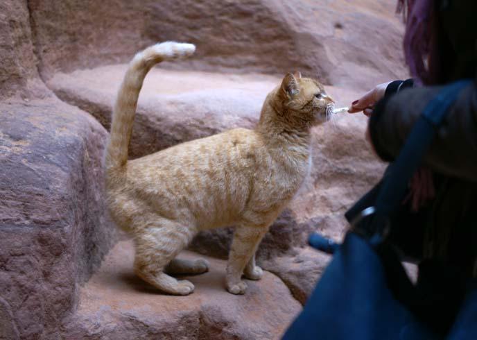 tourists feeding stray feral cat